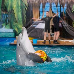Дельфинарии, океанариумы Жуковского