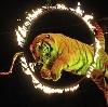 Цирки в Жуковском