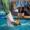 Дельфинарии, океанариумы в Жуковском