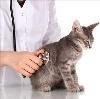 Ветеринарные клиники в Жуковском